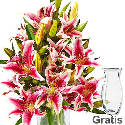 10 rosa-weiße Lilien