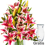 10 pink-white lilies