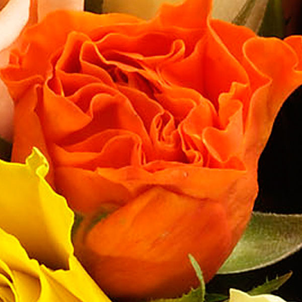 Individual mixed coloured roses with vase
