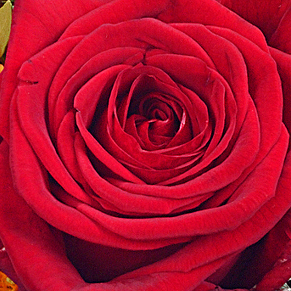 Rosenstrauß Rubin mit Vase