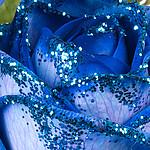 blaue Rose mit Glitter