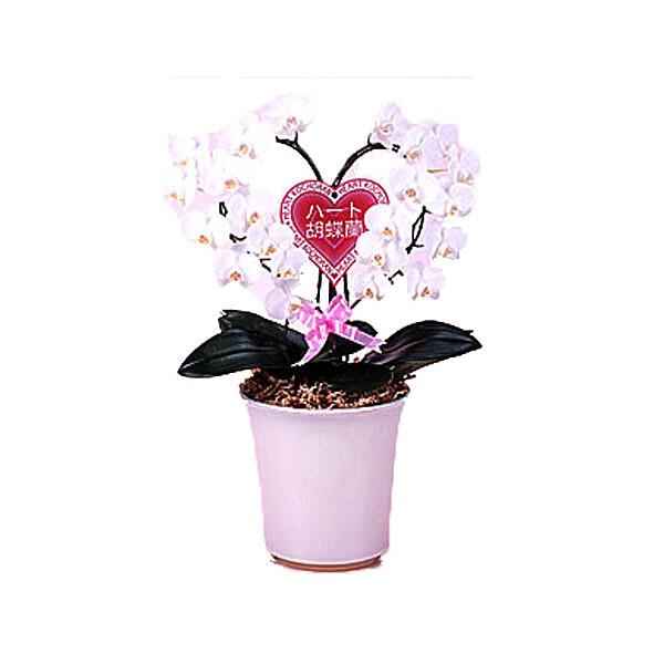 Orchideenherz