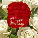 Rose Happy Birthday