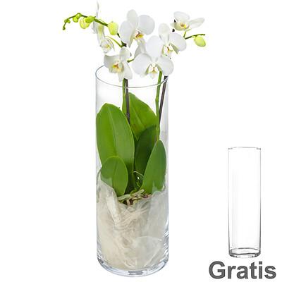 Weißer Orchideentraum