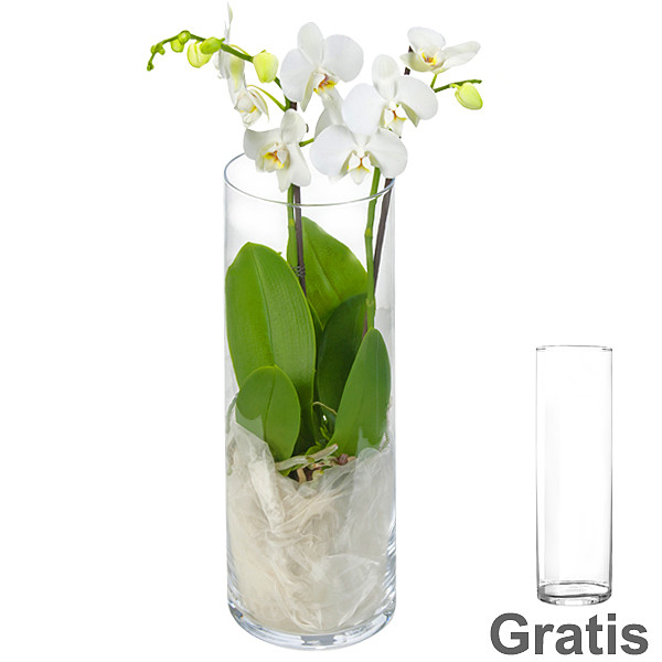 White Orchid Dream