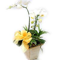 Orchidee im Topf