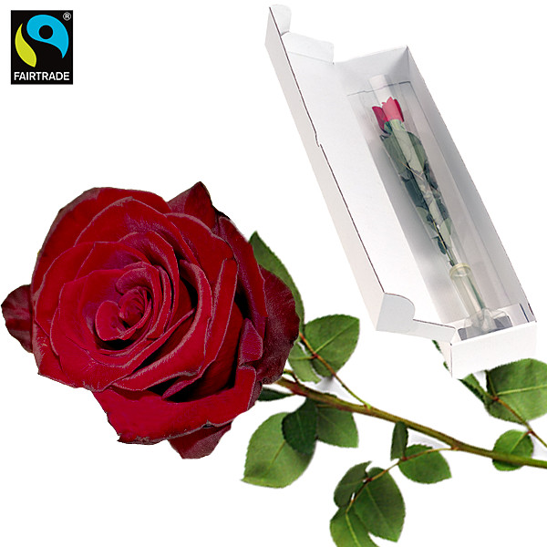 Rote, langstielige Fairtrade Rose in edler Verpackung