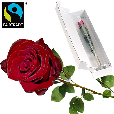 Red FAIRTRADE premium rose