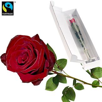 Red FAIRTRADE rose
