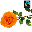 Orange FAIRTRADE rose