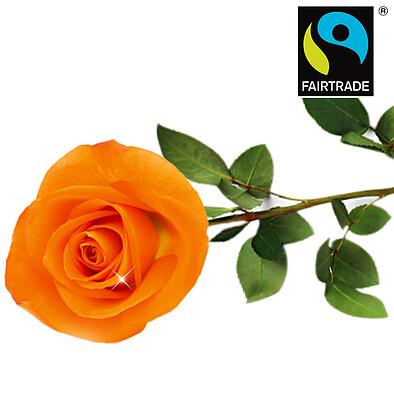 Orange FAIRTRADE Einzelrose in edler Verpackung