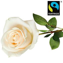 Weiße FAIRTRADE Einzelrose