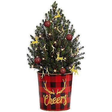 Weihnachsbaum Bescherung