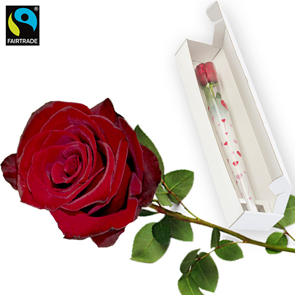 Red long-stemmed FAIRTRADE rose with gift box: