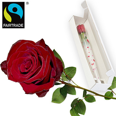 Rote FAIRTRADE Premiumrose in edler Verpackung: Ich liebe Dich