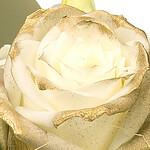 Rose mit Goldglanz
