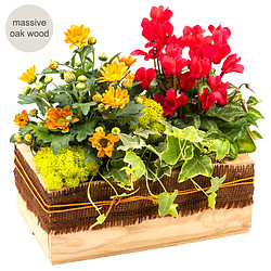 Arrangement Schöner Tag in a wooden box
