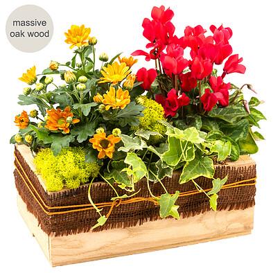 Arrangement Schöner Tag in a wooden box