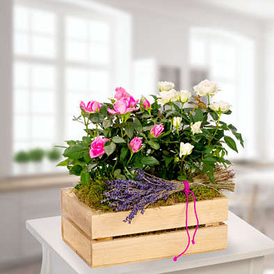 Pink and white roses in a wooden box