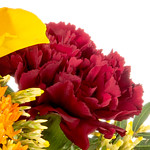 dark red carnations