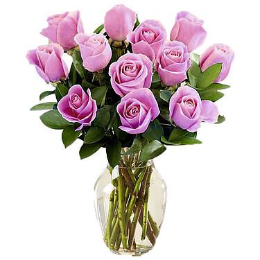 12 lila Rosen