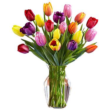 Rainbow Tulip Bouquet - 15 Stems