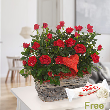 Red Roses in basket with Ferrero Raffaello