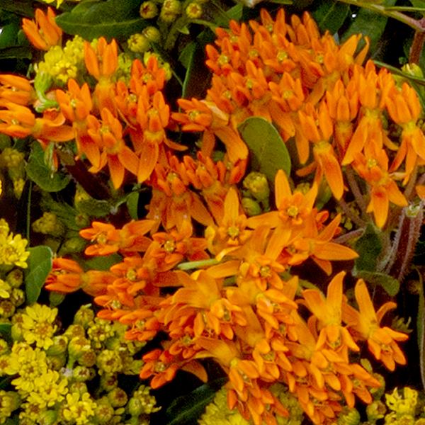 Flower Bouquet Landpartie with vase & Ferrero Raffaello