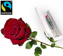 Rote Fairtrade Rose