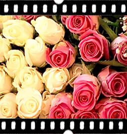 1. Wir liefern nur Blumen bester Qualität