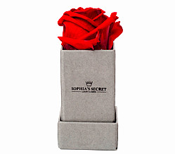 1 rote haltbare Rose