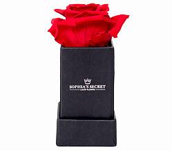 1 rote haltbare Rosen