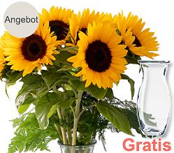 7 Sonnenblumen