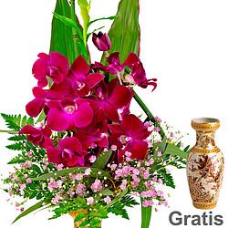 Asiatische Orchideen