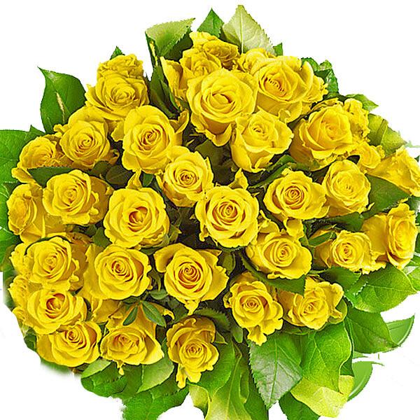 Gelbe Rosen im Bund