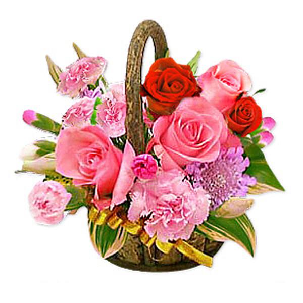 Blumenkorb Blütenstar